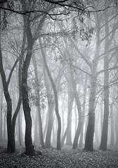 Misty forest / Ködös erdő (Ibolya Mester) Tags: hungary