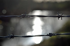 barbed wire (conall..) Tags: nikonafsnikkorf18glens50mm prime lens primelens barb barbs barbedwire barbed fence back backlit backlight intothelight sun sunny silhouette wire metal steel