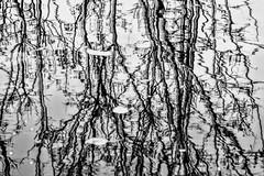 Pond Reflection (pmorris73) Tags: arboretum pennstateuniversity statecollege pennsylvania century 2cee 3cee 4cee 5cee 6cee 7cee 8cee 9ca0619 1ka1719