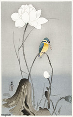 Kingfisher with Lotus Flower (1900 - 1945) by Ohara Koson (1877-1945). Original from The Rijksmuseum. Digitally enhanced by rawpixel.