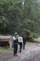 KLoE_img_9914 (kloe_chan) Tags: joaquin miller park hike oakland berkeley bay area family trees