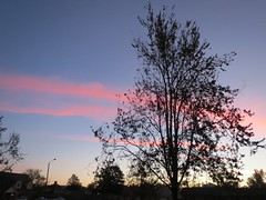 Beautiful Morning. (dccradio) Tags: lumberton nc northcarolina robesoncounty outdoor outdoors outside nature natural sky color colorful pink contrail bluesky morning morningsy goodmorning thursday thursdaymorning fall autumn november tree trees treebranches brach branches treebranch treelimb treelimbs beauty pretty scenic silhouette canon powershot elph 520hs