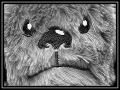 """Fuzzy Toy..."" -- MACRO MONDAYS - 21.01.19 - ""Pick Two"" (NikonShutterBug1) Tags: macro closeup nikond7100 macromondays tokina100mm spe smartphotoeditor picktwo chewbacca toy starwars blackandwhite bw fuzzy"