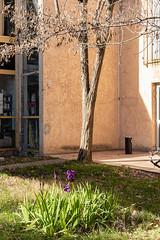 Ecole supérieure d'art d'Aix-en-Provence (jacqueline.poggi) Tags: aixenprovence bouchesdurhône claudepradellebar ecolesupérieuredart france modernarchitecture provence architect architecte architecture artschool contemporaryarchitecture journéeportesouvertes école écoledart