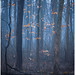 Misty Forest 1
