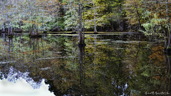 2018 Barnfull 6D (14)-Edit (Scott Sanford Photography) Tags: 6d canon ef50mmf14 eos fall naturalbeauty naturallight nature outdoor reflection texas topazlabs water colors martindiesjrstatepark