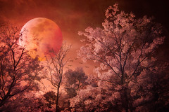 Blood Moon Rising - Textured (byron bauer) Tags: byronbauer super blood wolf moon composite sky clouds trees birds ir infrared painterly texture orton effect lunar luna red landscape 720nm eerie topaz simplify d70irconversion