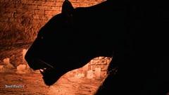Shadow (M.NeightShambala) Tags: devil may cry 5 v nero dante trish lady capcom atsuno kamiya dmc photo mode sparda vergil