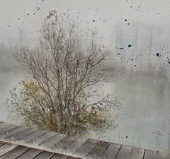 Tras el cristal. Behind the glass (marisabosqued) Tags: niebla fog árbol tree cristal glass clavealta highkey río river ebro zaragoza snapseed