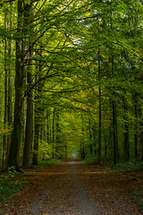 Straight path. (Azariel01) Tags: 2018 belgique belgium halle hallerbos bois woods forest forêt automne fall autumn path chemin trees arbres straight