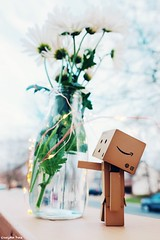 Friday (gusdiaz) Tags: danbo fujiphotography bokeh dof flowers home love friday beautiful relaxing winter invierno viernes amor casa weekend fuji fujifilm