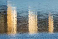 28/365 (Jane Simmonds) Tags: forestofdean steammillslake water winter reflections windy 3652019