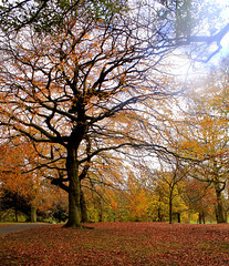 Autumn in the park (yorkiebrian) Tags: autumn leaves trees parks leeds