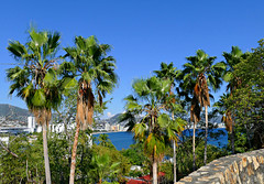 Through the Palm Trees (Sandra Leidholdt) Tags: acapulco mexico sandraleidholdt palmtrees shoreline coast waterfront bay pacificocean tropical tree ocean acapulcobay
