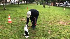 IMG_8531 (Doggy Puppins) Tags: educación canina adiestramiento canino perro dog