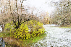 First snow. (fedoseenko) Tags: санктпетербург россия красота colour природа beauty blissful loveliness beautiful saintpetersburg sunny art shine light russia day park peace blue white небо color sky pretty sun пейзаж landscape clouds view heaven mood serene golden gold colours picture road tree grass nature alley trees walkway field outdoors old d800 wood holy path winter snow water reflection cloud sanctuary lake feodorovsky осень autumn 24120mmf3556d