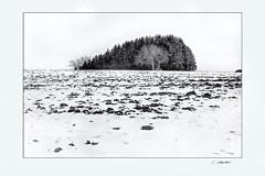 Ampertal131 (siggi.martin) Tags: europa europe deutschland germany bayern bavaria schwarzweis blackandwhite landwirtschaft agricultur acker acre baum tree bäume trees baumgruppe grove schnee snow schneebedeckt snowcovered winter winterlich wintry monochrome