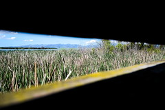 Hide view (Kiwi Jono) Tags: view hide walk harts creek canterbury dfa28105f3556 pentax pentaxk1 water reeds