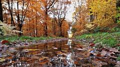 La flaque d'eau (Un jour en France) Tags: canonef1635mmf28liiusm canoneos6dmarkii forêt automne hautsdefrance leshautsdefrance feuille tree
