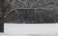 game over (humbletree) Tags: november morningwalk madison wisconsin