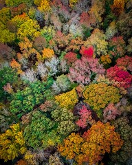 Autumn Eye View (Wandering In Search Of) Tags: wildernessculture wilderness liveoutdoors beautifudestinations earthfocus earthpix stayandwander planetearth earth birdseyeview visualsoflife autumnfoliage fallfoliage fallleaves autumnleaves moody5k agameof10k agameoftones moodygram moody flickrgood travelgram travel wanderlust wander roam foliage autumn fall nature photo photooftheday droneoftheday fromewhereidrone djiglobal dronestagram djimavicair djimavicpro djispark aerial dji drones drone