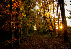Woodland Walks (Fergal Gleeson) Tags: autumn carlow color colors countryside fall foliage hiking ireland landscape leaves nature outdoor outdoors photography road scenery scenic season trees walk walking woodland ngc