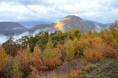 Appel de phare (RarOiseau) Tags: v1500 automne alpesdehauteprovence paysage forêt montagne saariysqualitypictures