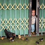baby and chicks, Lao Chai Village thumbnail