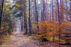 Autumn Forest (Petra S photography) Tags: spreewald herbst herbsfarben herbstwald autumn autumncolours autumnforest autumnmood brandenburg automne forest trail