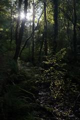 Forest Light (EmPhoto.) Tags: exmoor forestlight emmiejgee landscapepassion uk sonya7r stream
