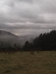pines in the fog (GAWV) Tags: mountains mountain sunset fog graysky westvirginia appalachian appalachia sky keyser mineralcounty forest grass pasture winter clouds