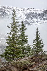 Season's Greetings (Kirk Lougheed) Tags: alberta banff banffnationalpark canada canadian canadianrockies morainelake rockymountains valleyofthetenpeaks autumn fall landscape mountainside nationalpark outdoor park snow tree