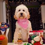 Happy 1st Birthday Dolly. Explored Dec 17, 2018 #22 thumbnail
