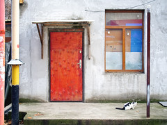 red door, window and cat (Pomo photos) Tags: cat color colored window door wall red blue pipe tail em10mk2 olympus olympus25mm frame street geometry architecture animal urban candid pet floor wood concrete fun lines line city cityscape house building yellow fur decay abandoned brick brown paint leaf leaves
