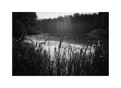Heijkersbroek in autumn VIII (Passie13(Ines van Megen-Thijssen)) Tags: ell heijkersbroek herfst wandeling netherlands nature blackandwhite bw sw zw zwartwit monochrome monochroom monochrom fujifilm x100f inesvanmegen inesvanmegenthijssen