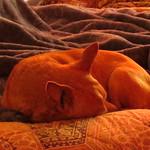 sleeping dog Perky 1 2 19 thumbnail