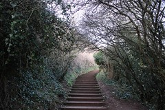 Forest Stairs (charlie.chowdhry) Tags: path forest stairs
