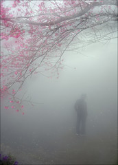 F_MG_6969-1-Canon 6DII-Tamron 28-300mm-May Lee 廖藹淳 (May-margy) Tags: maymargy 人像 背影 濃霧 模糊 散景 櫻花 樹 街拍 天馬行空鏡頭的異想世界 台灣攝影師 苗栗縣 台灣 中華民國 fmg69691 portrait viewfromback cherryblossom trees thick fog flowers 花 blur bokeh streetviewphotography mylensandmyimagination naturalcoincidencethrumylens taiwanphotographer 心象意象與影像 miaolicounty taiwan repofchina canon6dii tamron28300mm maylee廖藹淳