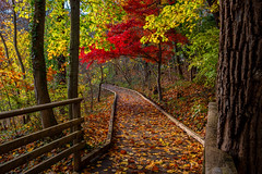 A Walk To Remember (djrocks66) Tags: stonybrook avalon longisland ny autumn xt100 fuji fujifilm trail hiking outdoors landscapes color leaves trees foliage fall nature absolutelystunningscapes