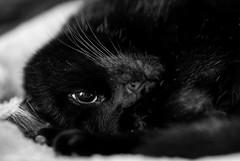 Napping Cat (Peter_Cameron) Tags: olympusomdem1 mzuiko75mmf18