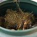 A compost bin in the garden