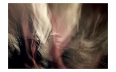 vaporous spirits (TeoB) Tags: icm sfocato intentionalcameramovement parallelworlds