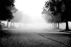 Fully fog (jaume zamorano) Tags: blackandwhite blancoynegro blackwhite blackandwhitephotography blackandwhitephoto bw boira brouillard d5500 fog foggy ground lleida monochrome monocromo mist nikon noiretblanc nikonistas niebla pov street streetphotography streetphoto streetphotoblackandwhite streetphotograph tree