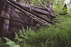 Pullen House [wooden structure] (i threw a guitar at him.) Tags: alaska skagway 2017 pullen house home hotel ruin ruins remains history local historict location visit attraction explore exploring travel unique secret hidden abandoned rot wood shack shed falling apart ferns fern green brown