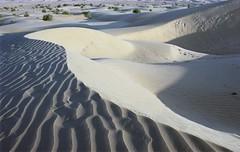 A3985 (lumenus) Tags: india rajasthan sanddune sand dune jaisalmer desert
