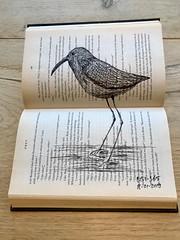 B151-365 one bird a day - Wading Wonder (www.doortje.nl) Tags: vogel pájaro uccello passarinho طائر oiseau птица birdo voël 鸟 doortjenl 1tekeningperdagnl pen ink inkt