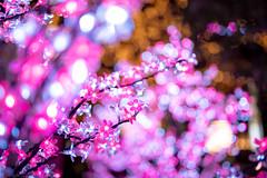 Explored - plastic blossoms (gemapozo) Tags: night illumination tokyo nihonbashi pentax japan k1mkii sakuradori 東京都 日本 jp hdpentaxdfa50mmf14sdmaw 夜景 イルミネーション 日本橋さくら通り