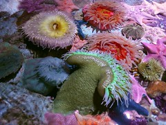 IMG_20180920_163931 (bryandkeith) Tags: unitedstates aquariumofthepacific longbeach