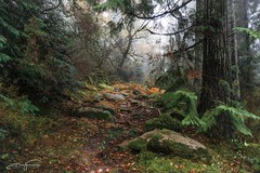 Way Through the Forest (jorgeverdasca) Tags: goth mist fog rain trees nature pathway forest woodland gerês portugal