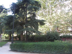The grounds of the museum, Calle Serrano,  Madrid (d.kevan) Tags: museums madrid calleserrano 1903 grounds grass trees plants flowers paths museolazarogaldiano hedges gardens streetlamps